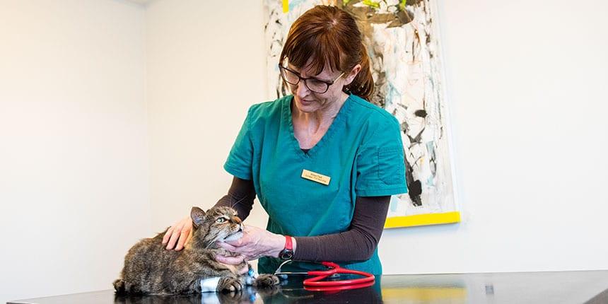 akut dyrlægehjælp