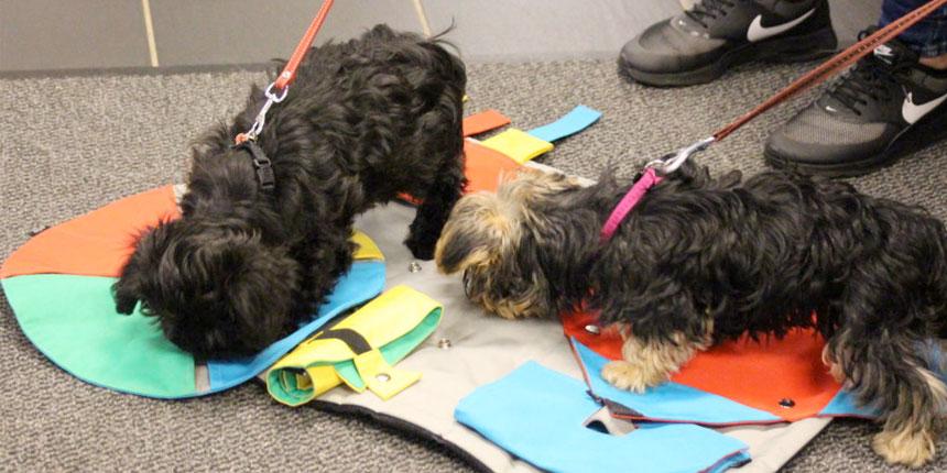 hvalpetræning små hunde viborg