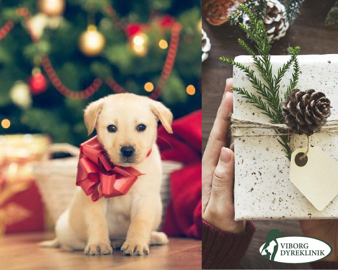 gratis foto af dig og dit kæledyr