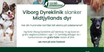 Viborg Dyreklinik slanker Midtjyllands dyr